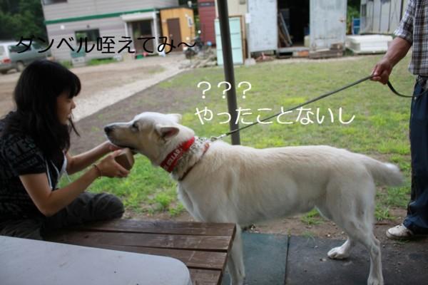 f:id:buhi84shin:20120729201102j:image