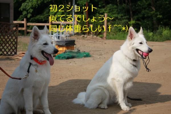 f:id:buhi84shin:20120729201300j:image