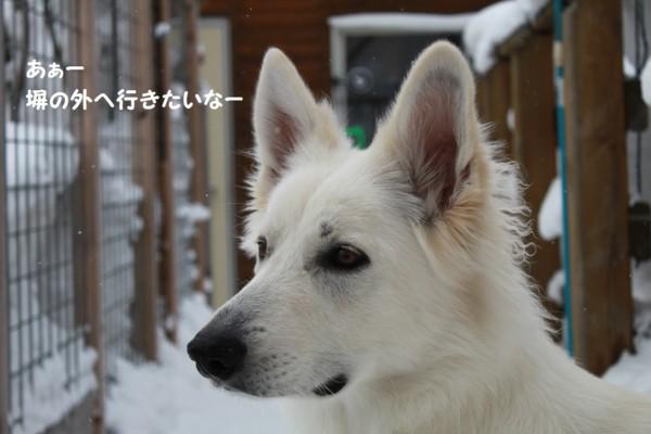 f:id:buhi84shin:20130204223052j:image