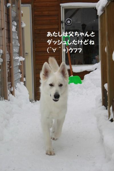 f:id:buhi84shin:20130204223054j:image