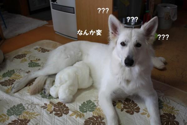 f:id:buhi84shin:20130210092600j:image