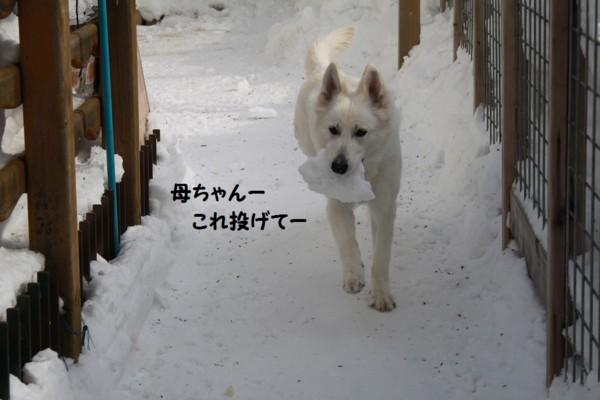 f:id:buhi84shin:20130212154712j:image