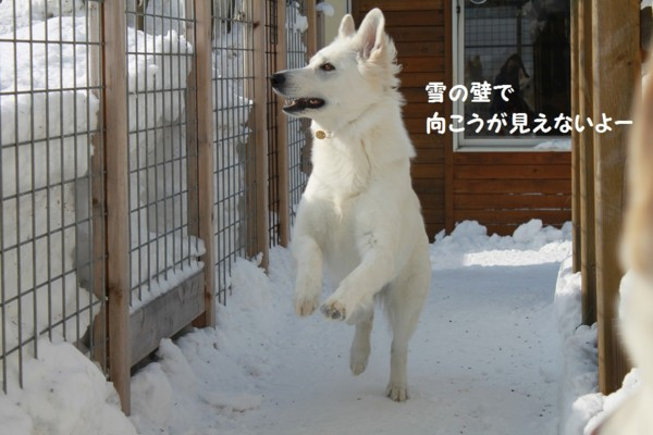 f:id:buhi84shin:20130212154718j:image