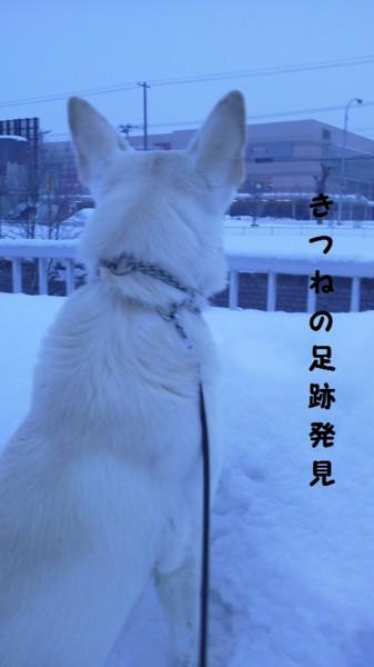 f:id:buhi84shin:20130213120616j:image