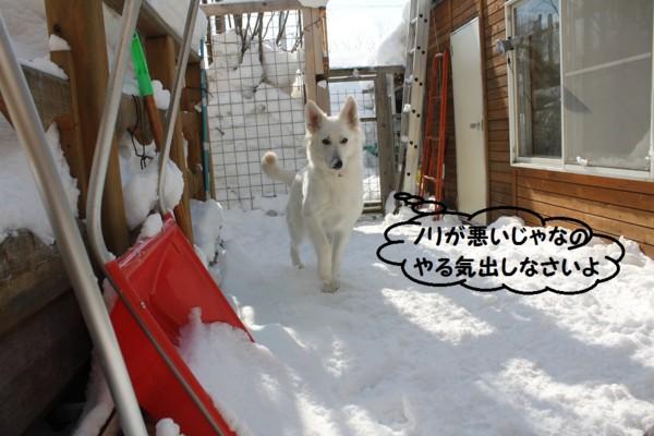 f:id:buhi84shin:20130215111042j:image