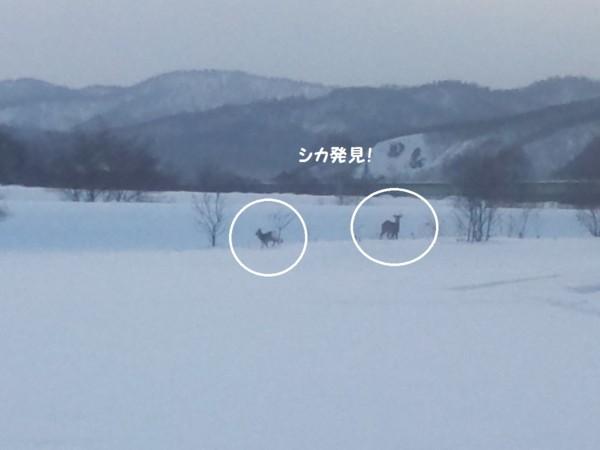 f:id:buhi84shin:20130216204522j:image