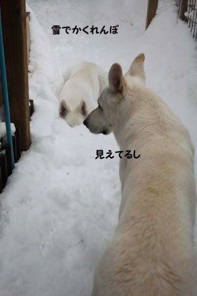 f:id:buhi84shin:20130222180839j:image