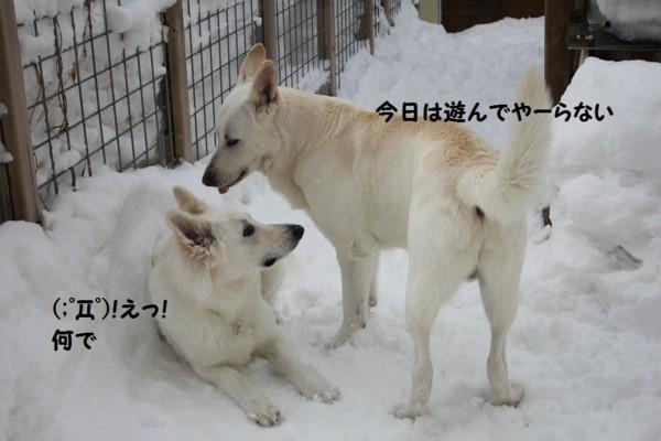 f:id:buhi84shin:20130222185456j:image