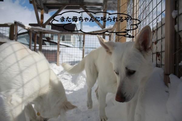 f:id:buhi84shin:20130223213102j:image