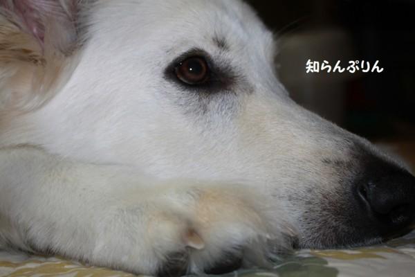 f:id:buhi84shin:20130225215443j:image