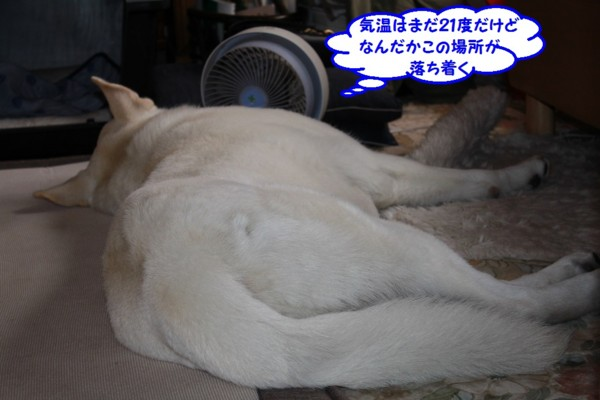 f:id:buhi84shin:20130710220814j:image