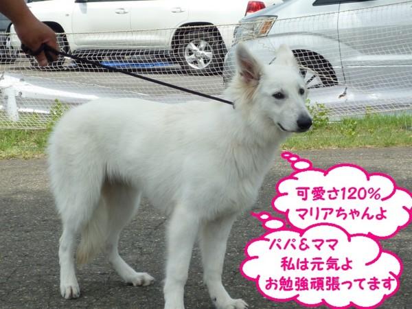 f:id:buhi84shin:20130714204127j:image