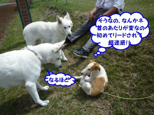 f:id:buhi84shin:20130715211317j:image