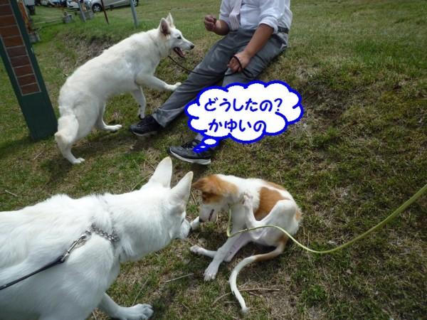 f:id:buhi84shin:20130715211319j:image