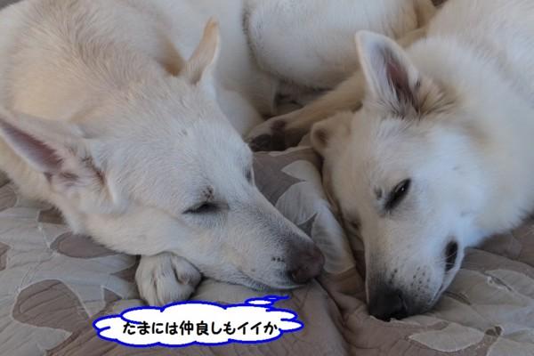 f:id:buhi84shin:20131218213211j:image