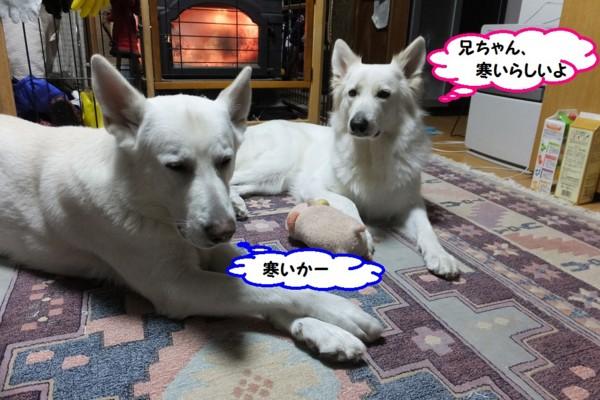 f:id:buhi84shin:20131222200824j:image