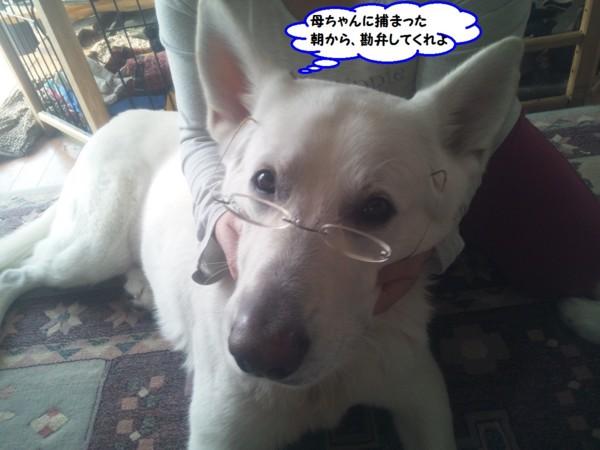 f:id:buhi84shin:20131223211511j:image