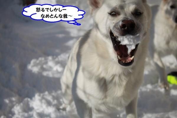 f:id:buhi84shin:20131231203844j:image
