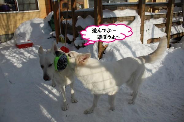 f:id:buhi84shin:20131231203848j:image