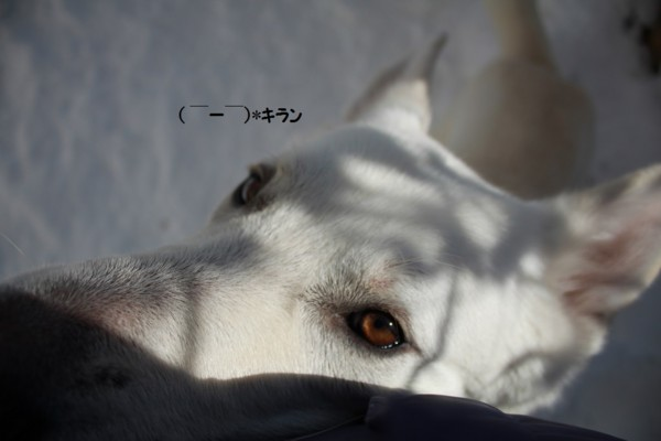 f:id:buhi84shin:20140119222429j:image