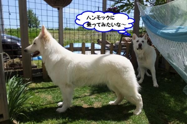 f:id:buhi84shin:20140601220115j:image