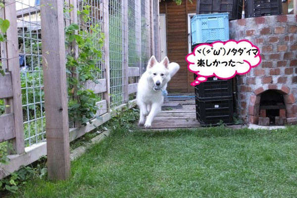 f:id:buhi84shin:20140620225333j:image