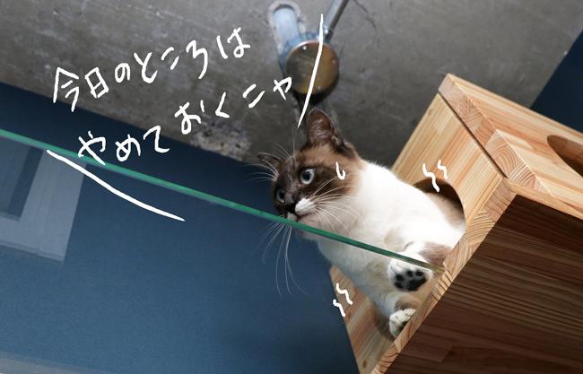 怯える猫の写真
