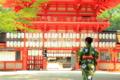 京都新聞写真コンテスト 下賀茂神社
