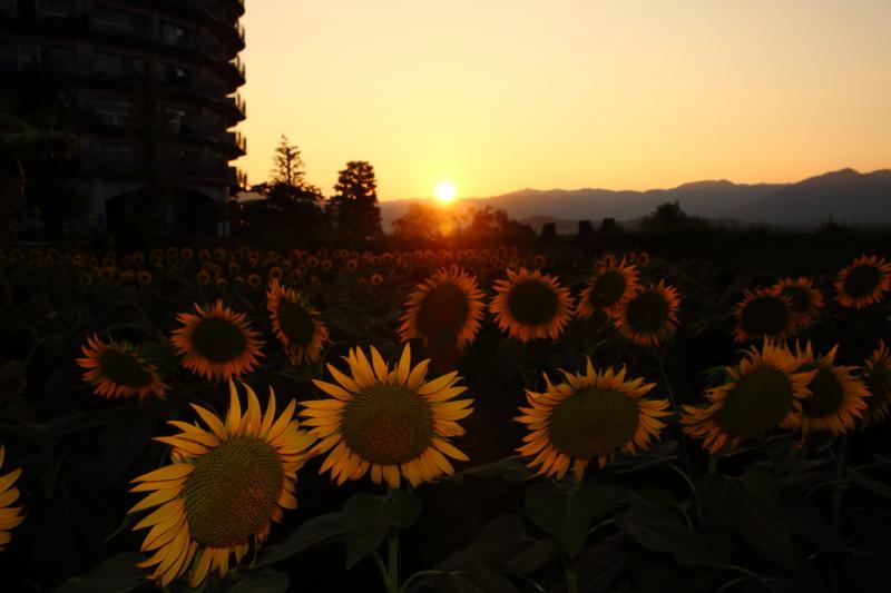 京都新聞写真コンテスト 暮れ