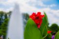 京都新聞写真コンテスト 噴水と花