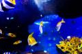 京都新聞写真コンテスト 海の魚たち