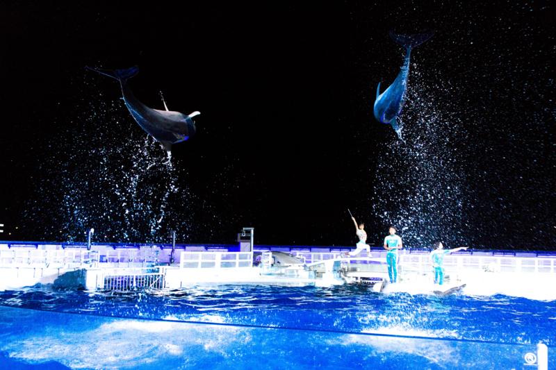 京都新聞写真コンテスト 夜のイルカショー