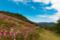 京都新聞写真コンテスト コスモスと空と山と