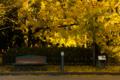 京都新聞写真コンテスト 秋を楽しむベンチ