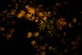 京都新聞写真コンテスト 紅緑葉