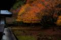 京都新聞写真コンテスト 裏庭