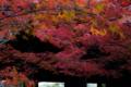京都新聞写真コンテスト 紅紅紅