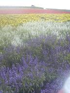 f:id:bunny114:20080905125200j:image