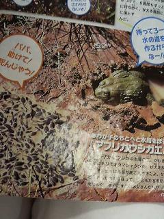 f:id:bunny114:20100125121048j:image