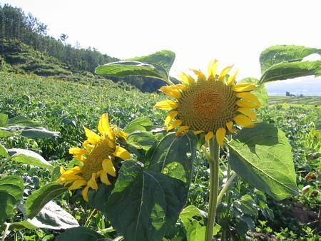 f:id:buonpaese:20070724172558j:image:left