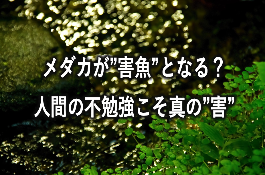 f:id:buramuraki:20190611204106p:plain