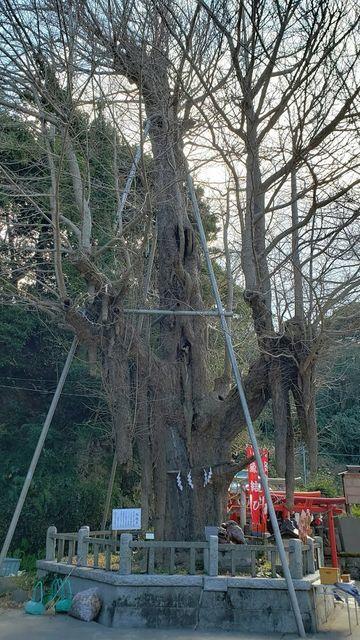 海南神社の御神木