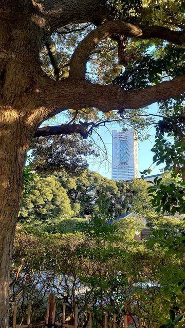 伊勢山皇大神宮境内からの眺望
