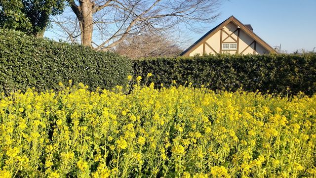くりはま花の国ハーブ園近くの葉の花