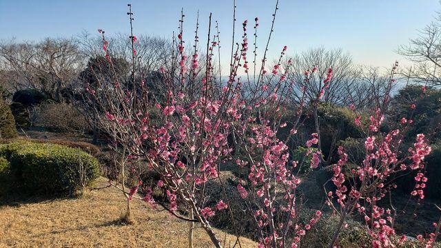 くりはま花の国/県木の広場からの眺望