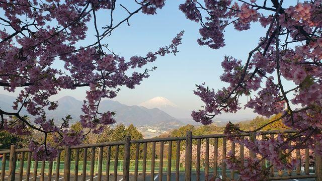 西平畑公園と富士山