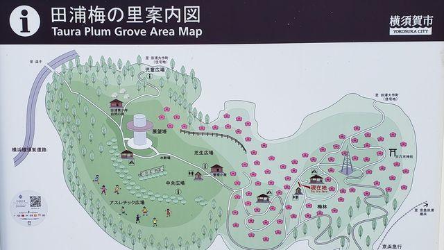 田浦梅の里の案内図