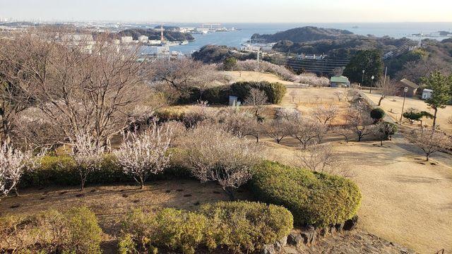 田浦梅の里の展望台からの眺望