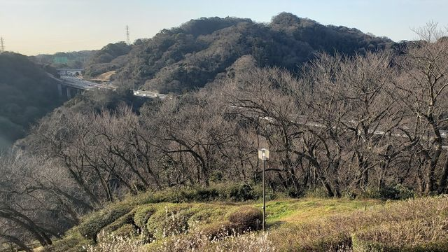 田浦梅の里からの眺望