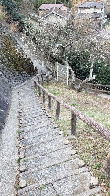 田浦梅の里入口の階段